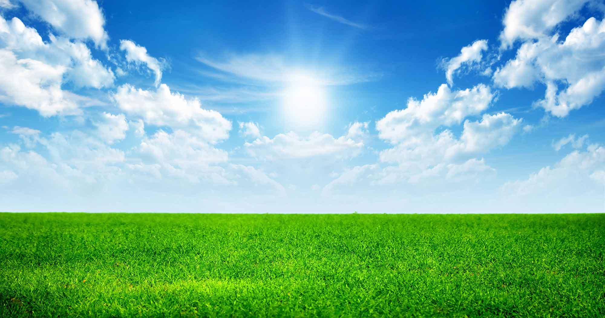 sky-grass